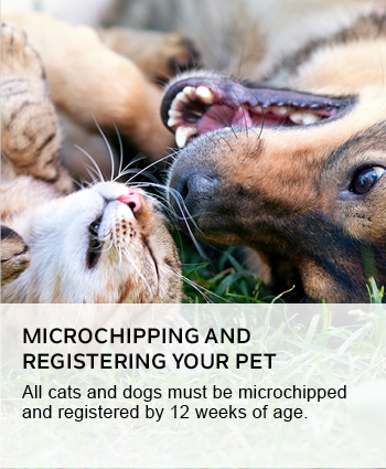 Microchipping and registering your pet