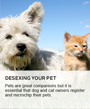 Desexing your pet
