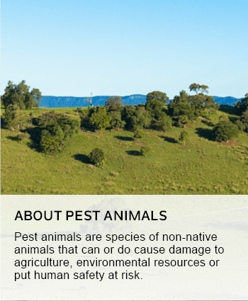 About pest animals