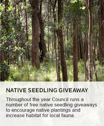 native seedlign giveaway